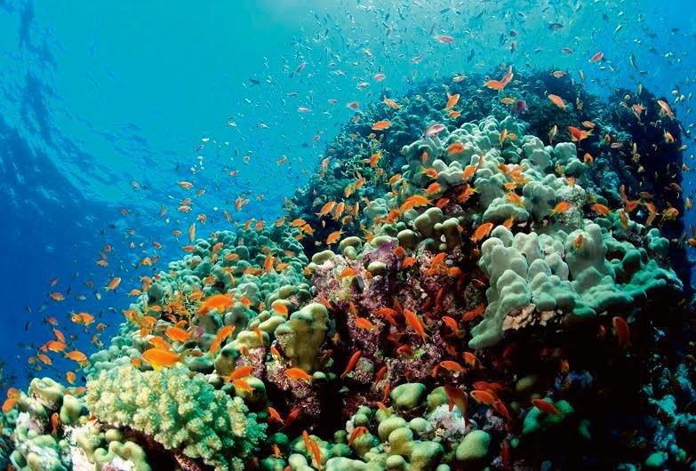 reef.jpg__800x0_q85_crop